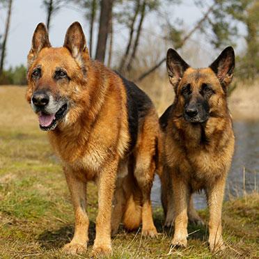 Esprit Canin 33 - Conseiller en comportement canin
