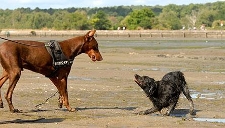 Méthode Esprit Canin 33 | Education canine Gironde