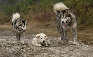 Stages Esprit Canin 33 - Conseiller en comportement canin
